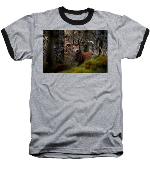 Stag In The Woods Baseball T-Shirt