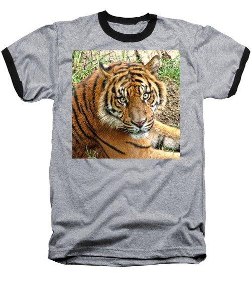 Staring Tiger Baseball T-Shirt