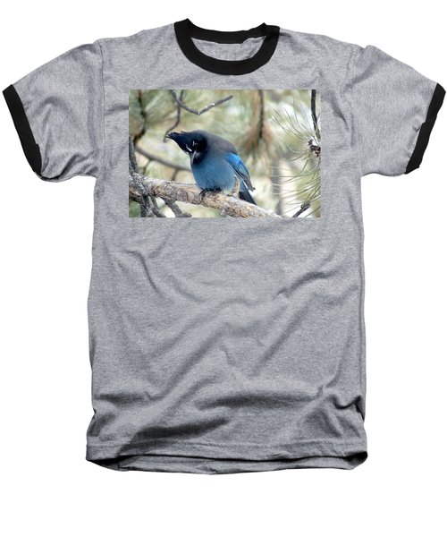Steller's Jay Looking Down Baseball T-Shirt by Marilyn Burton