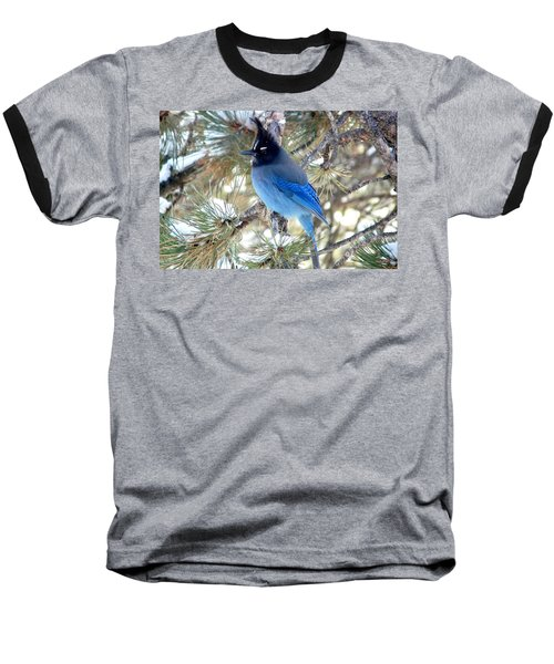 Steller's Jay Profile Baseball T-Shirt by Marilyn Burton