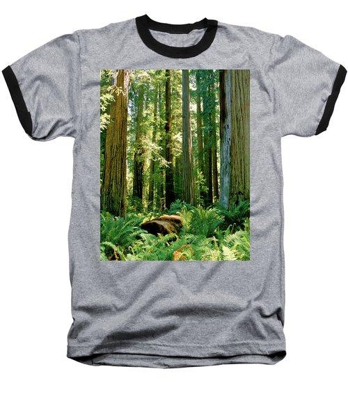 Stout Grove Coastal Redwoods Baseball T-Shirt by Ed  Riche