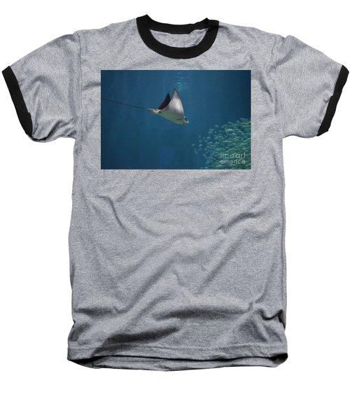 Stringray Heading Towards Fish Baseball T-Shirt by DejaVu Designs