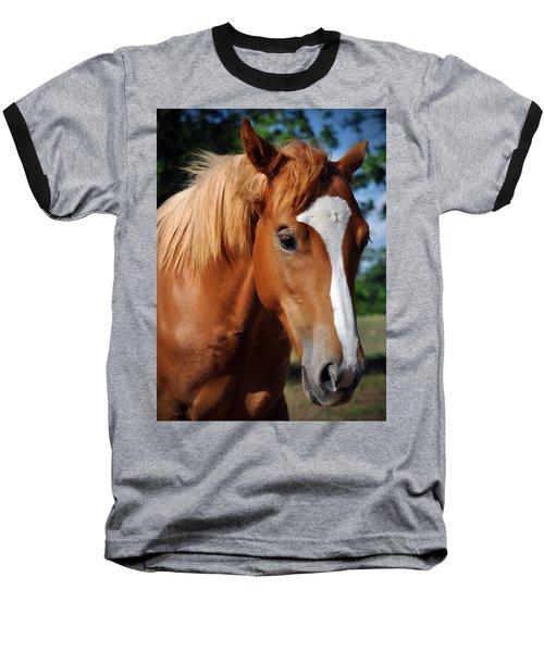 Stud Horse  Baseball T-Shirt