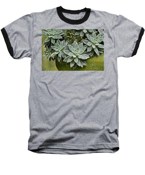 Succulent Rose In Moss Green Pot Baseball T-Shirt