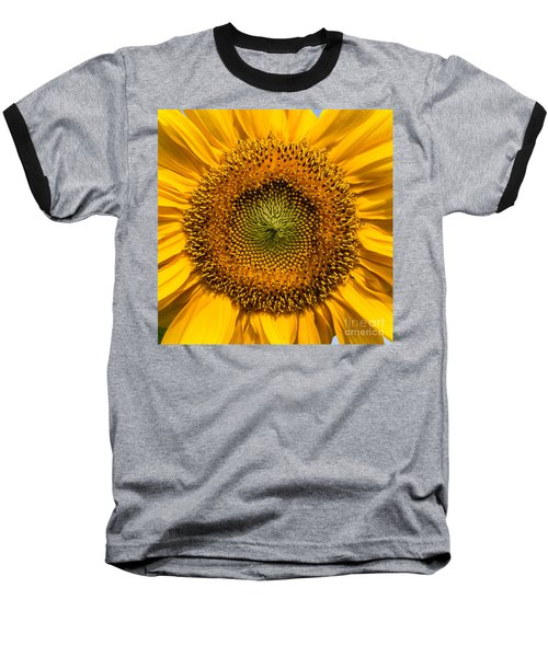 Sunflower Closeup Baseball T-Shirt by Carsten Reisinger