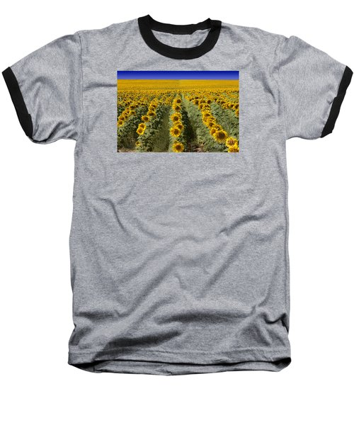 Sunflower Field Baseball T-Shirt