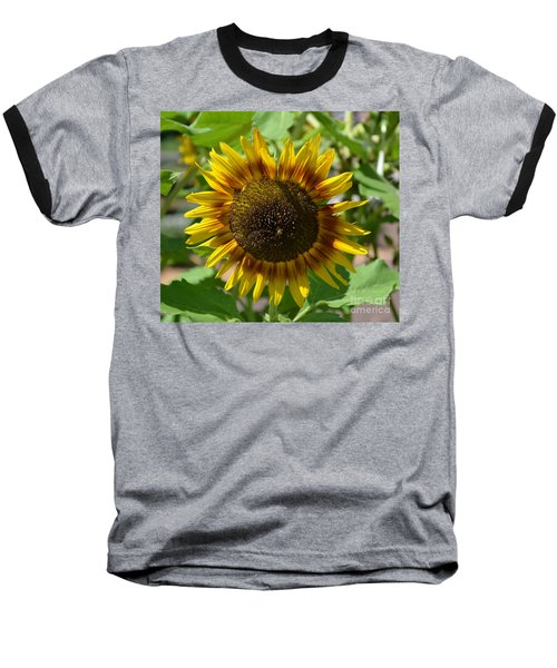 Sunflower Glory Baseball T-Shirt by Luther Fine Art