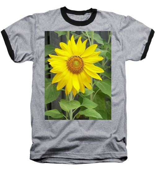 Sunflower Baseball T-Shirt by Lisa Phillips