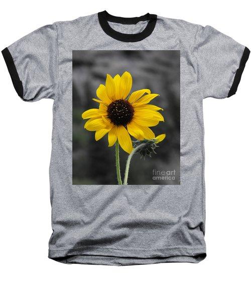 Sunflower On Gray Baseball T-Shirt by Rebecca Margraf