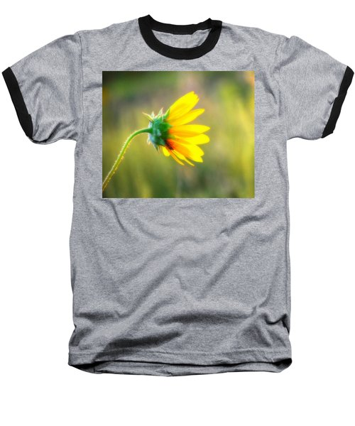 Sunflower Sunrise 6 Baseball T-Shirt by Diane Alexander