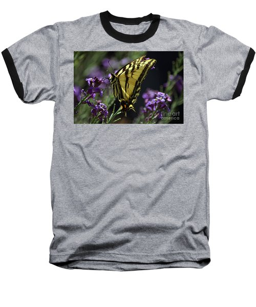 Swallowtail Butterfly On Lavender  Baseball T-Shirt