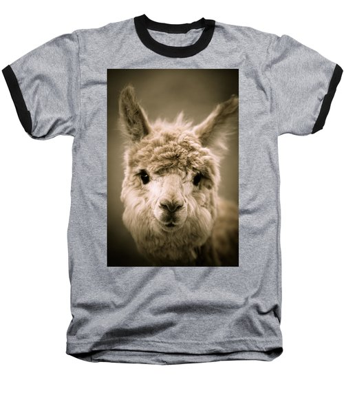 Sweet Alpaca Baseball T-Shirt