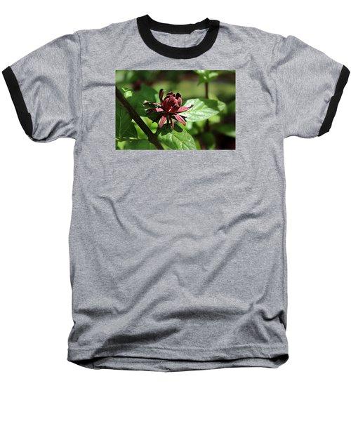 Sweet Shrub Baseball T-Shirt