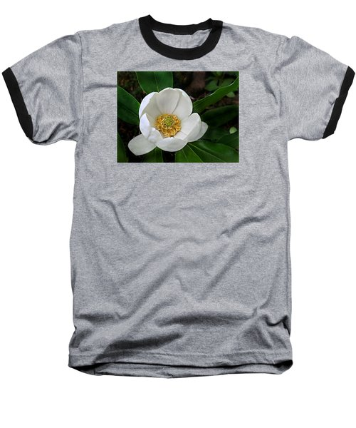 Sweetbay Magnolia Baseball T-Shirt by William Tanneberger