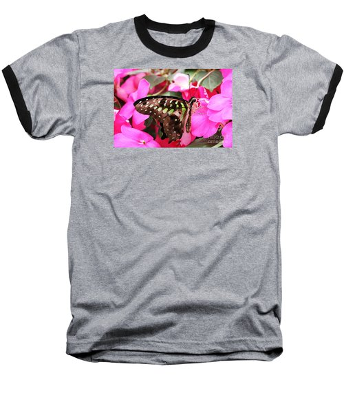 Tailed Jay Butterfly #4 Baseball T-Shirt