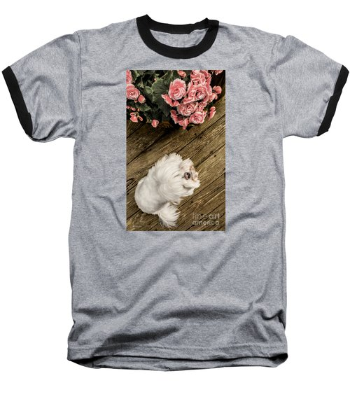 Havanese Puppy Baseball T-Shirt
