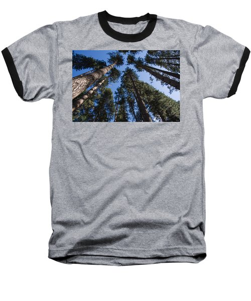 Talls Trees Yosemite National Park Baseball T-Shirt