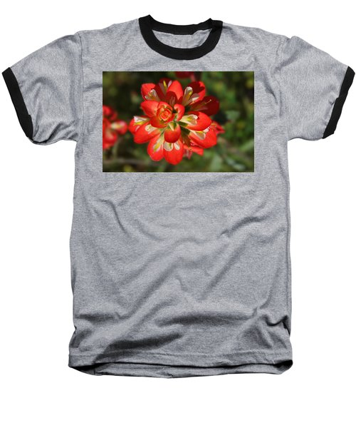 Texas Paintbrush Baseball T-Shirt by Lynn Bauer