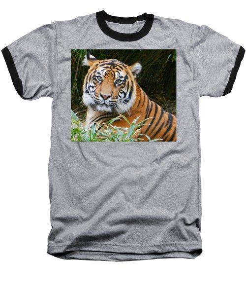 The Eyes Of A Sumatran Tiger Baseball T-Shirt by Emmy Marie Vickers