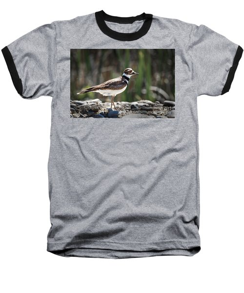 The Killdeer Baseball T-Shirt by Robert Bales