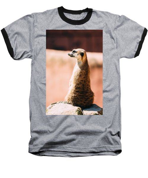 The Lonely Meerkat Baseball T-Shirt by Pati Photography