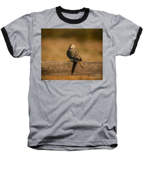 The Morning Dove Baseball T-Shirt by Robert Frederick