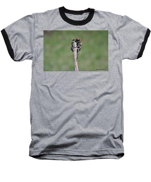 Baseball T-Shirt featuring the photograph The Posing Beetle by Verana Stark