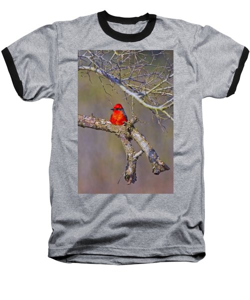 The Scarlet Letter Baseball T-Shirt by Gary Holmes