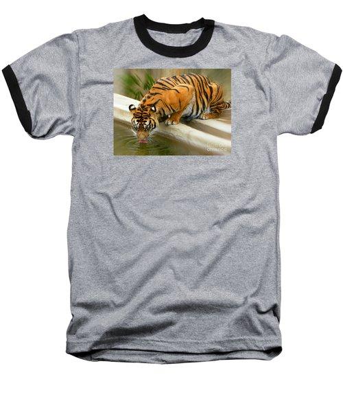 Thirsty Sumatran Tiger Baseball T-Shirt by Emmy Marie Vickers