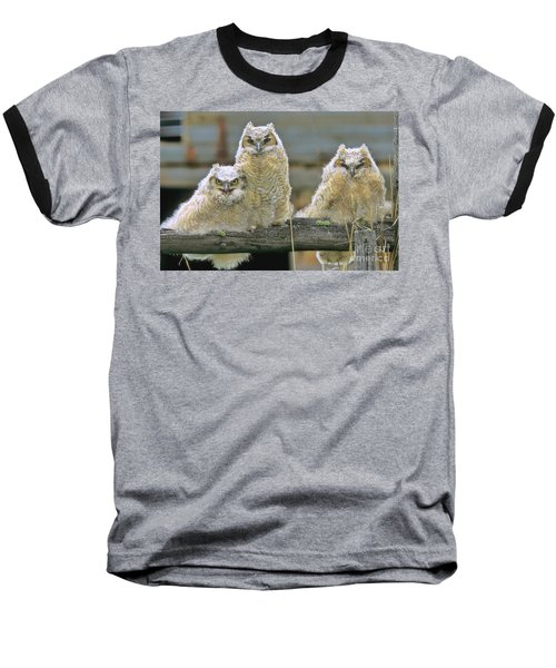 Three Great-horned Owl Chicks Baseball T-Shirt