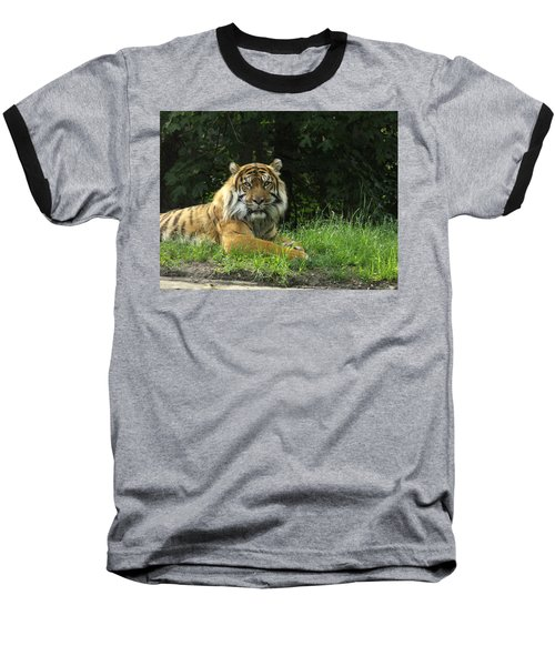 Baseball T-Shirt featuring the photograph Tiger At Rest by Lingfai Leung