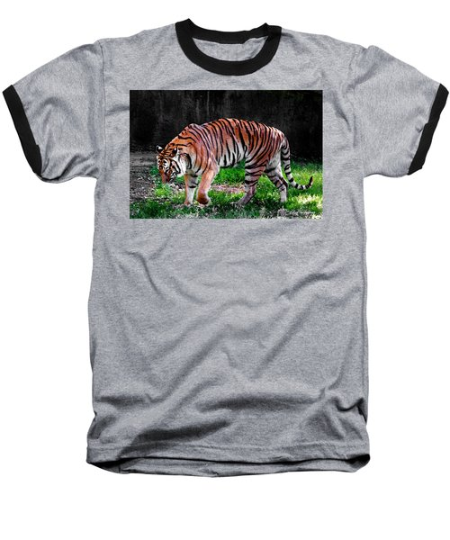 Tiger Tale Baseball T-Shirt