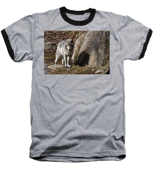 Baseball T-Shirt featuring the photograph Timber Wolf In Pond by Wolves Only