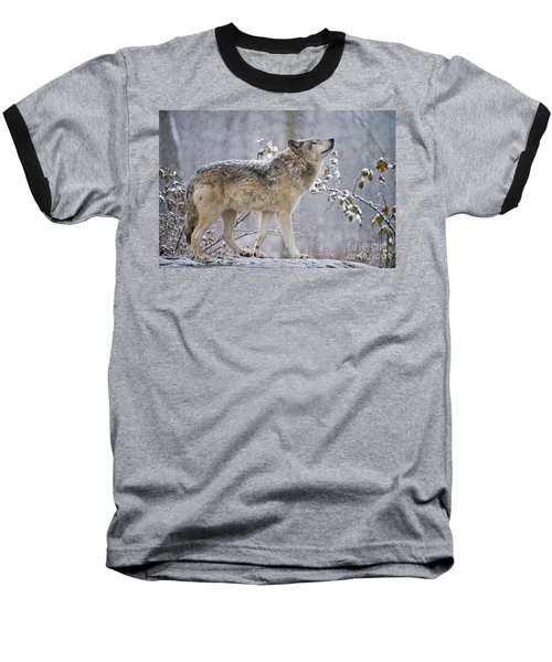 Timber Wolf Pictures 188 Baseball T-Shirt