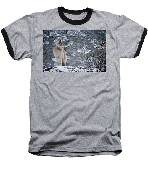 Timber Wolf Pictures 189 Baseball T-Shirt