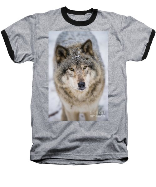 Timber Wolf Pictures 254 Baseball T-Shirt