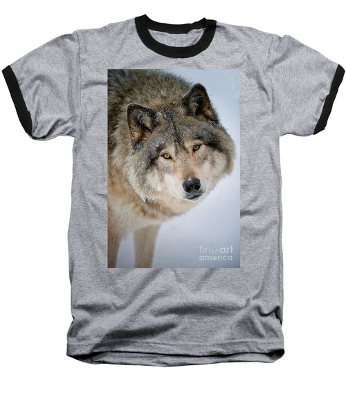 Timber Wolf Pictures 255 Baseball T-Shirt