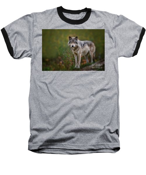 Timber Wolf Pictures 401 Baseball T-Shirt