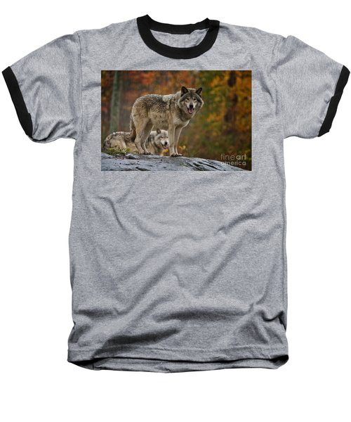 Timber Wolf Pictures 410 Baseball T-Shirt