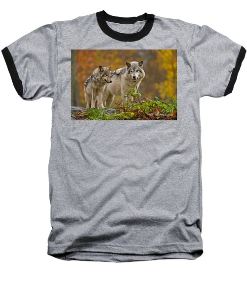 Timber Wolf Pictures 411 Baseball T-Shirt