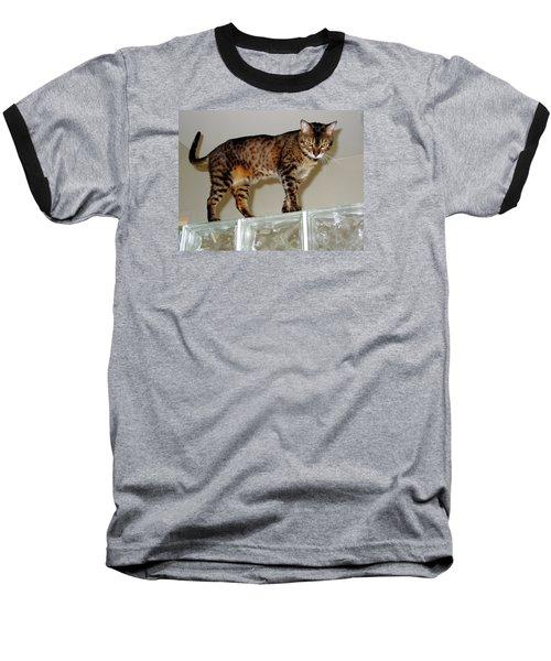 Baseball T-Shirt featuring the photograph Tora On Glass II by Phyllis Kaltenbach