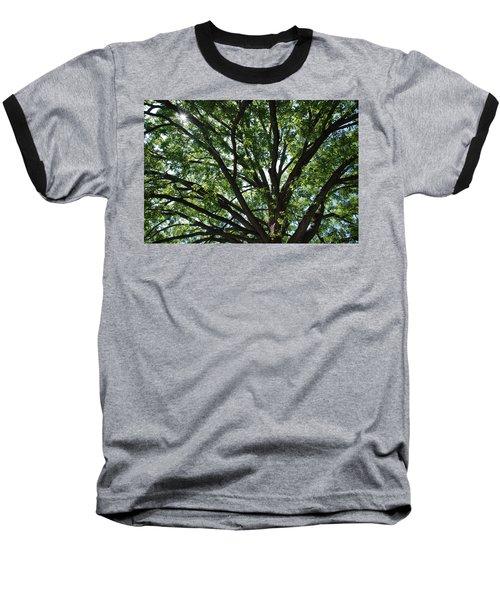 Tree Canopy Sunburst Baseball T-Shirt