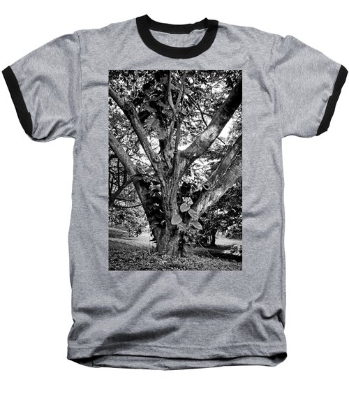 Tree Giant Baseball T-Shirt