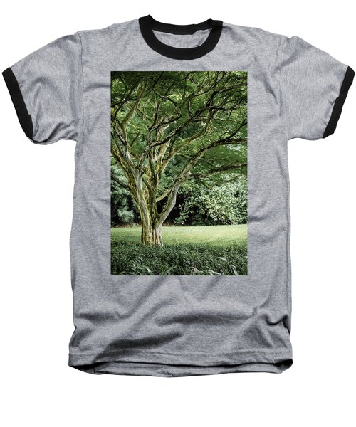 Tree Of Life Baseball T-Shirt by Debbie Karnes