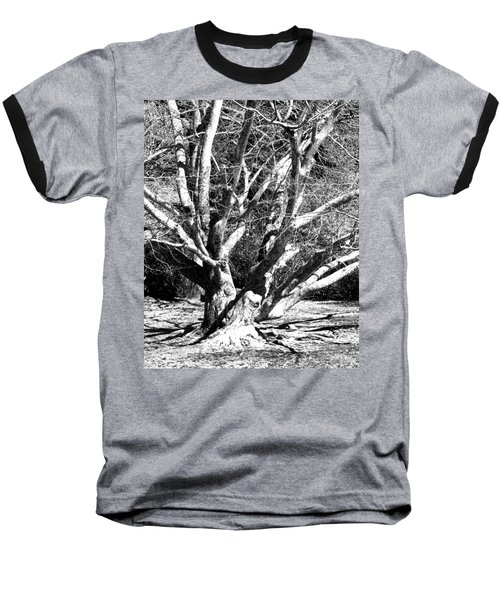 Tree Study In Black N White Baseball T-Shirt