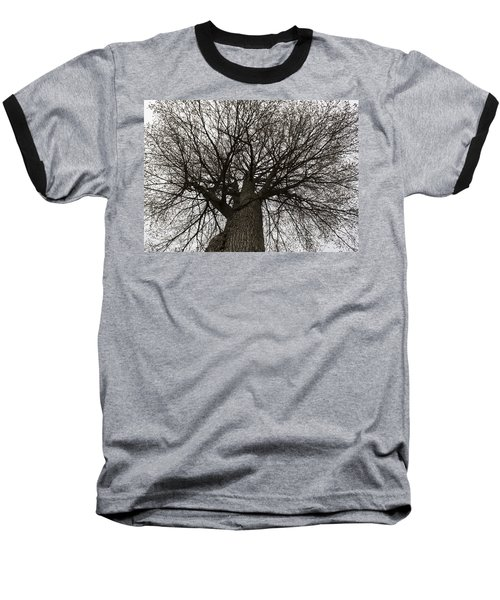 Tree Web Baseball T-Shirt
