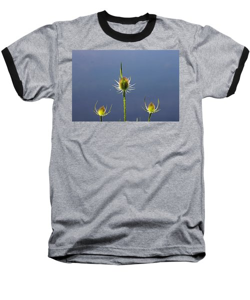 Trio Of Teasels Baseball T-Shirt