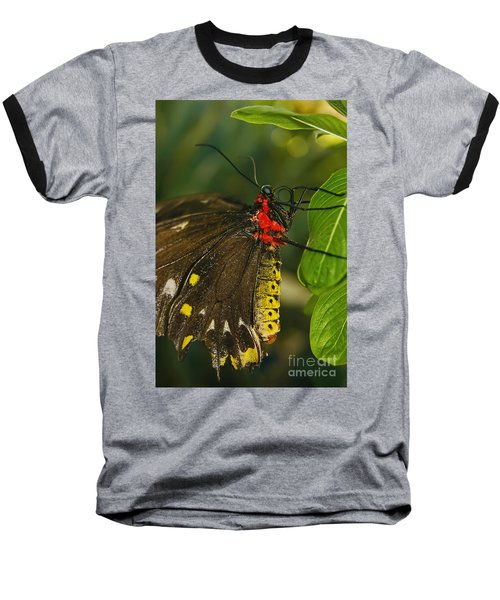 Baseball T-Shirt featuring the photograph Troides Helena Butterfly  by Olga Hamilton