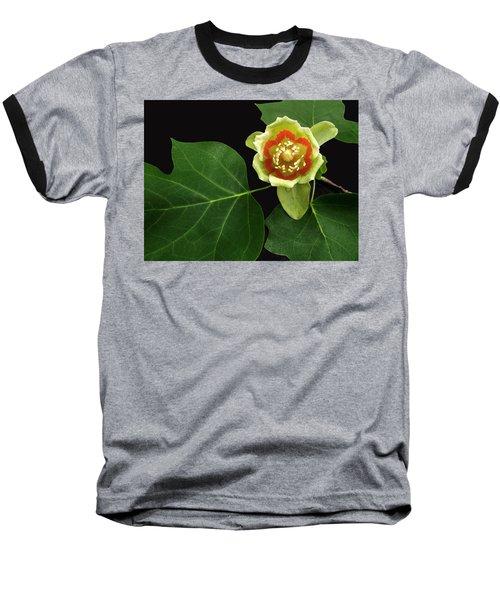 Tulip Bloom Baseball T-Shirt by Don Spenner
