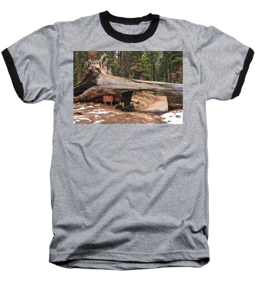 Tunnel Log Baseball T-Shirt by Muhie Kanawati